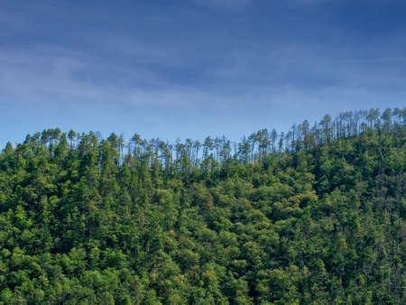 Treeline against blue sky. Pinewood hills. Stok Fotoğraf