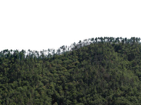 Treeline horizon on wooded hills, isolated against white background sky. Stok Fotoğraf