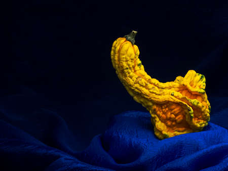 Ornamental squash on blue background, pumpkin., Still life, baroque style light painting.
