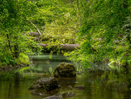 Beautiful generic natural stream background, with trees fallen across and rocks. Peaceful, idyllic. Bit overgrown.