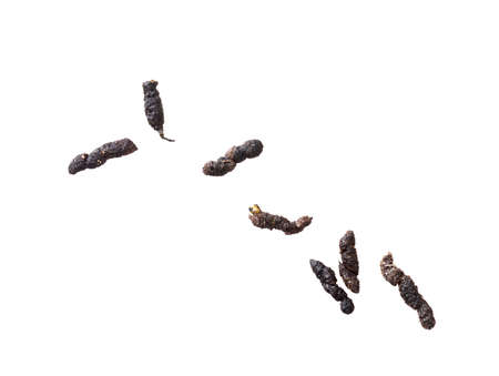 Mouse droppings, faeces, isolated on white background. Rodent infestation.