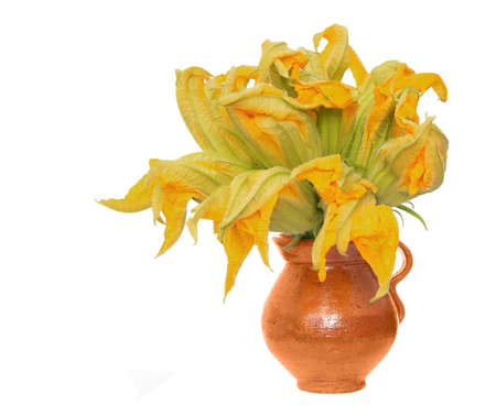 Zucchini flowers in rustic pot, isolated on a white background.