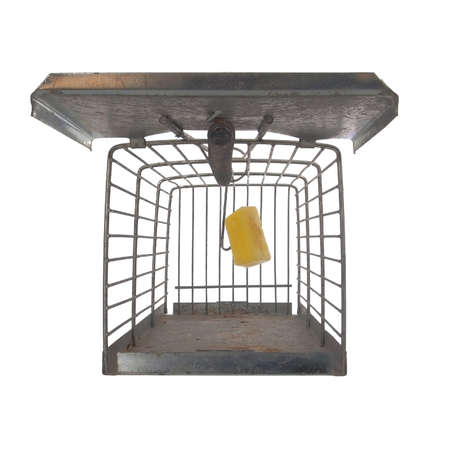 Humane type mousetrap, front view looking inside, isolated on white background, set with cheese to trap rodent. Or concept. Reklamní fotografie