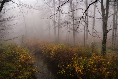 Woodland stream in autumn, fall, with fog and mist. In the Apennines, Italy, Europe.