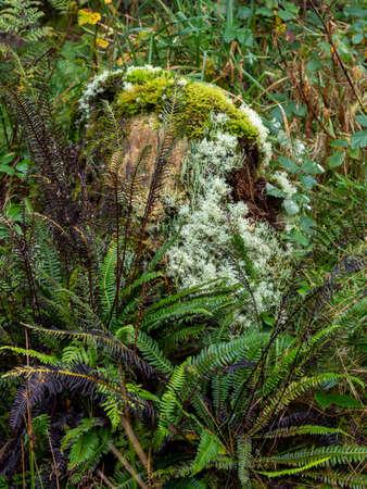Woodland clearing detail with moss, fern, lichen etc. Autumn.