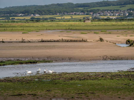 View over Horsey Island, Braunton Marsh, Devon, UK at low tide, photo taken from South West Coastal Path.