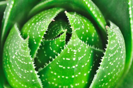Aloe background  Standard-Bild