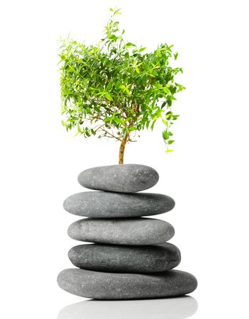 Japanese bonsai isolated on white background. Concept