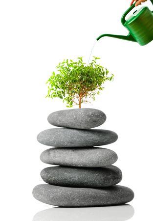 Japanese bonsai isolated on white background. Concept