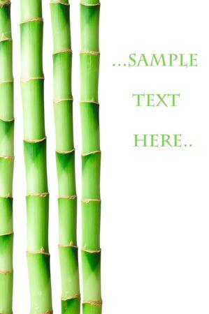 Bamboo isolated on white background