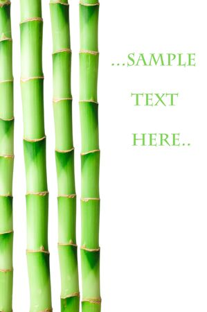 Bamboo isolated on white background