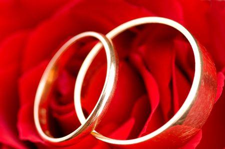 Two golden wedding rings in rose flower photo