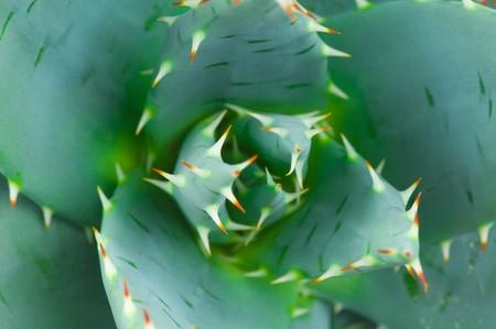 solvent: Aloe
