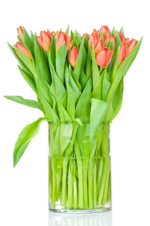 Tulips in the vase against white background  photo