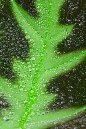 Water drops on green leaf. Macro photo