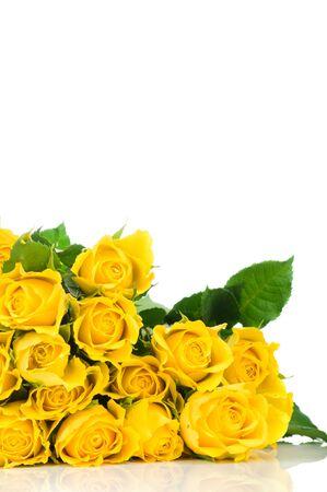 rosas amarillas: Rosas amarillas aisladas sobre fondo blanco