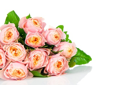 Pink roses isolated on white Stock Photo - 17928517