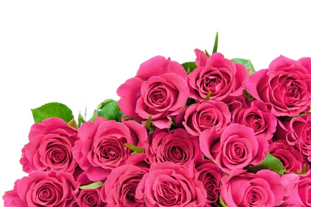 Pink roses isolated on white Stock Photo - 17929168