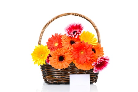 Mix gerber flowers in the wicker on white background photo