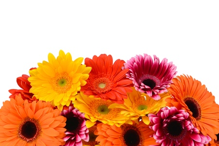 Gerbera flowers on white background photo
