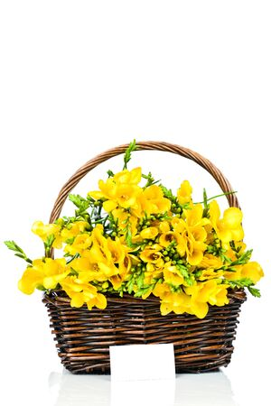 Yellow freesia in the basket isolated on white photo