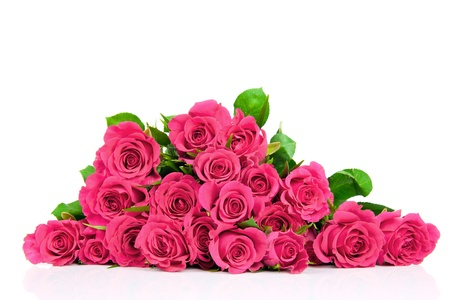 christmas pink: Pink roses isolated on white Stock Photo