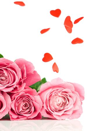 Pink roses isolated on white background photo