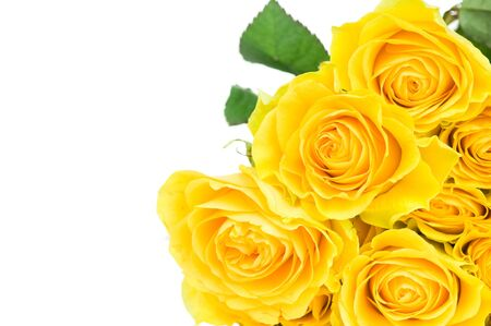 yellow rose: Yellow rose isolated on white background Stock Photo