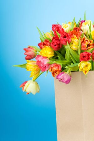 Tulips in paper bag on blue background  photo