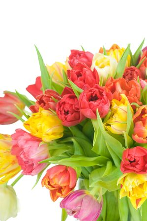 Tulips in the vase isolated on white background Stock Photo - 18527795