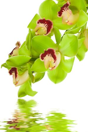 Beautiful Orchid isolated on white background photo