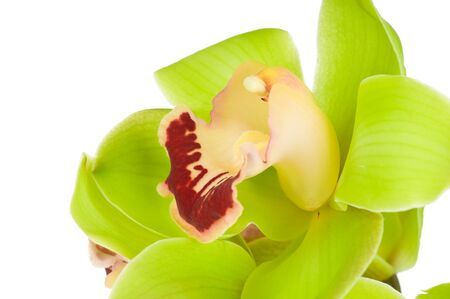 Beautiful Orchid isolated on white background Stock Photo - 18745308