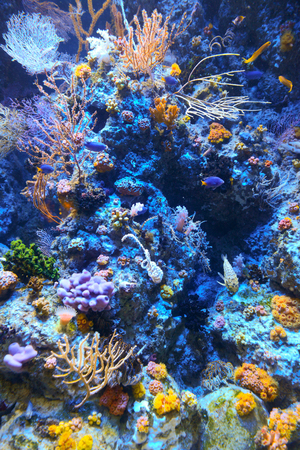 Corals reef photo