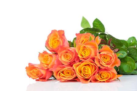Orange roses on white background Imagens