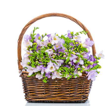 Lilac freesia in the wicker isolated on white photo