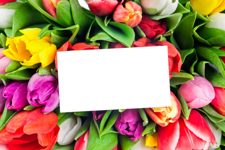 Tulips Standard-Bild