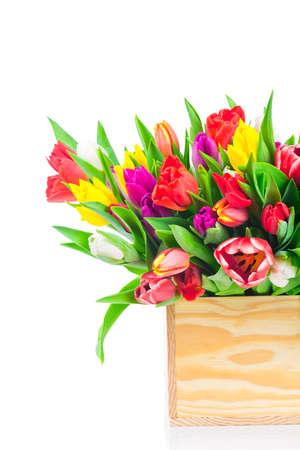 Tulips flowers on white background photo