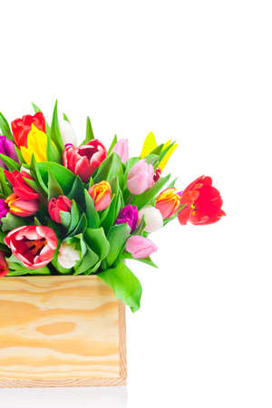 Tulips flowers on white background photo