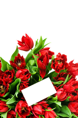 Tulips isolated on white background photo