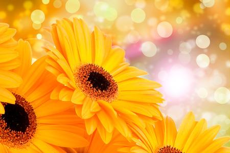 bouquet de fleurs: Fleurs orange de gerber sur fond de couleur Banque d'images