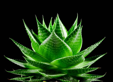 clinically: Pianta di Aloe