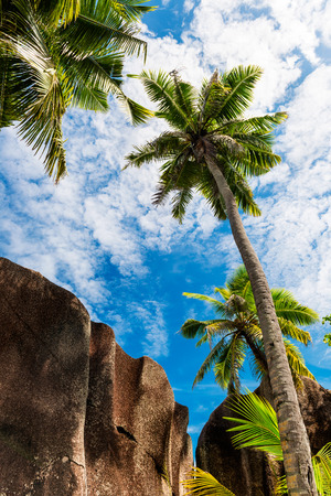 Tropical beach. The Seychelles photo