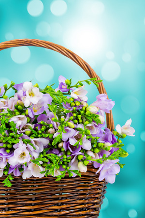 Freesia flowers in the wicker photo