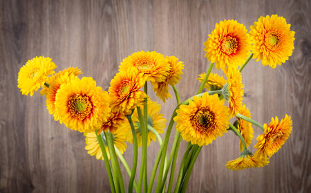 Gerber flowers on wooden background photo