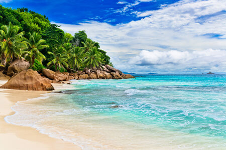 tropical leaves: Tropical beach. The Seychelles
