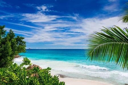 tropical plants: Tropical beach. The Seychelles
