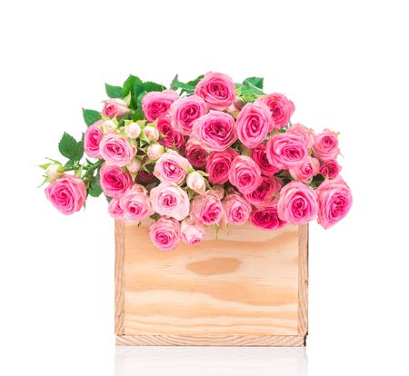 Roses in the box isolated on white background