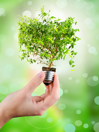 green technology: Light bulb in a hand green tree growing out of a bulb Stock Photo
