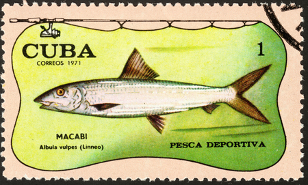 postmail: MOSCOW, RUSSIA - DECEMBER, 2015: a post stamp printed in CUBA shows a fish with the inscription MACABI albula vulpes (Linneo), the series Sport Fishing, circa 1971 Editorial