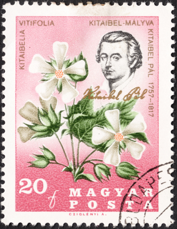 phytology: MOSCOW, RUSSIA - JANUARY, 2016: a post stamp printed in HUNGARY shows a portrait of Pal Kitaibel and Kitaibelia Vitifolia, the series The 150th Anniversary of the Death of Pal Kitaibel, circa 1967
